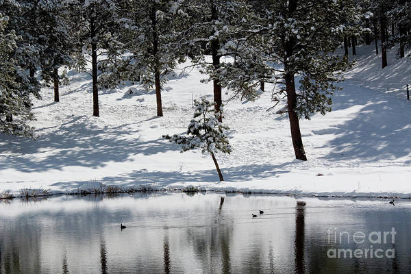 Photograph - Cold  Duck Pond In Colorado Snow by Steve Krull