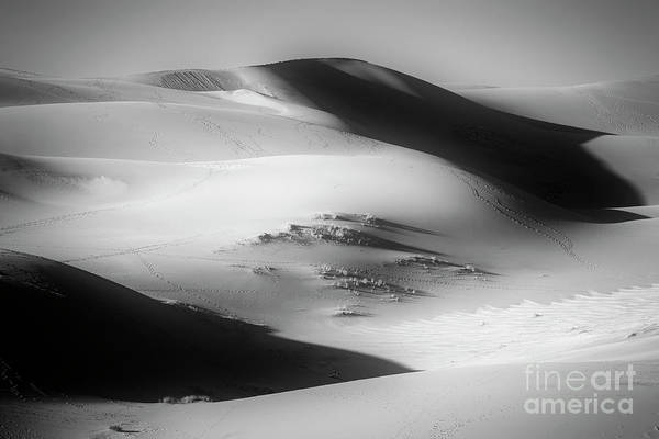 Photograph - Dunes by Scott Kemper