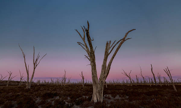 Photograph - Dusk At Dumbleyung Lake by Julian Cook
