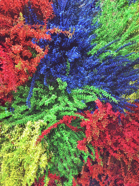 Tweets Photograph - Dyed Plants Background by Tom Gowanlock