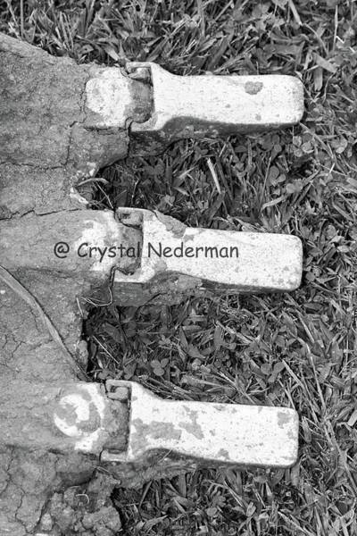 Photograph - E-2 by Crystal Nederman