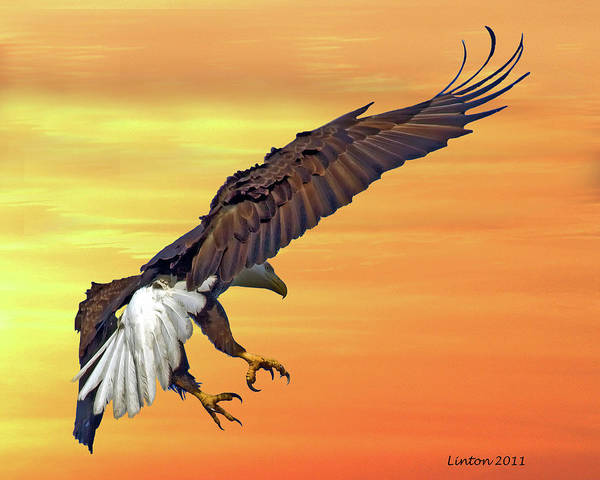 Photograph - Eagle At Sunset by Larry Linton
