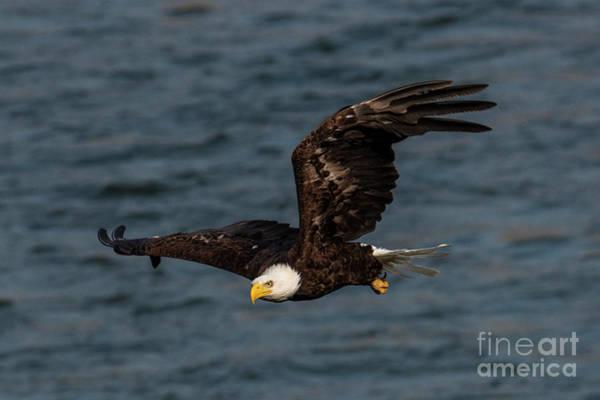 Wall Art - Photograph - Eagle Eye by Mike Dawson