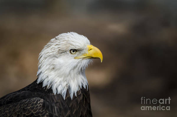 Eagle Profile Art Print