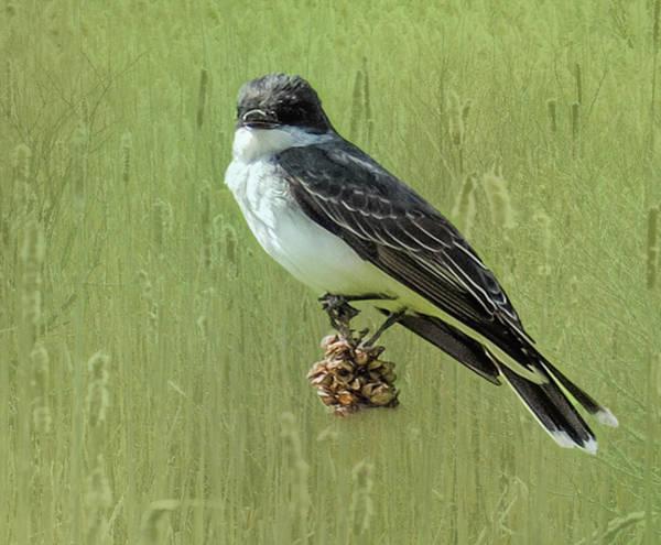 Digital Art - Eastern Kingbird Perching On Thistle. by Rusty R Smith