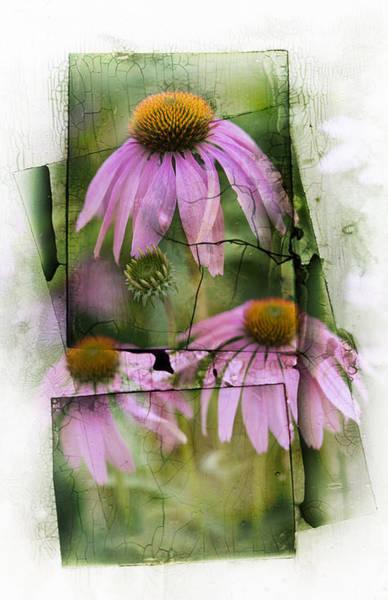 Coneflowers Photograph - Echinacea by Jeff Klingler