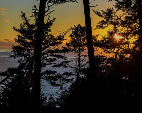 Photograph - Ecola Spruce Sunset by Robert Potts