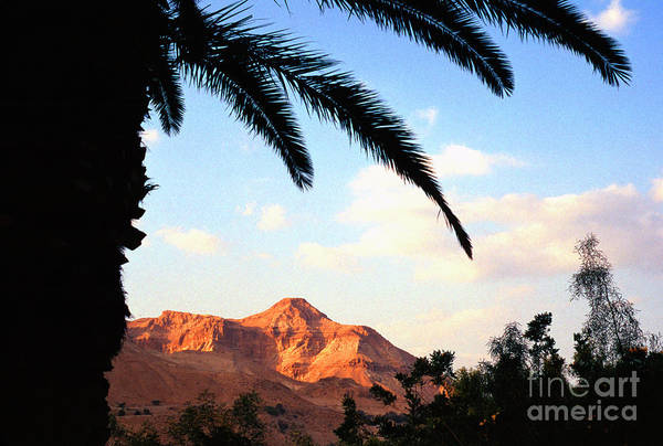 Photograph - Ein Gedi Oasis Israel by Thomas R Fletcher