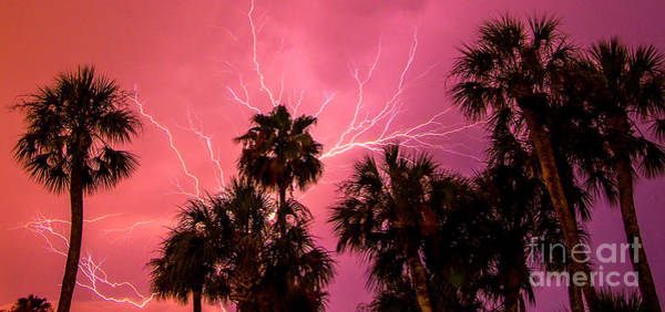 Wall Art - Photograph - Electrified Palms by Stephen Whalen