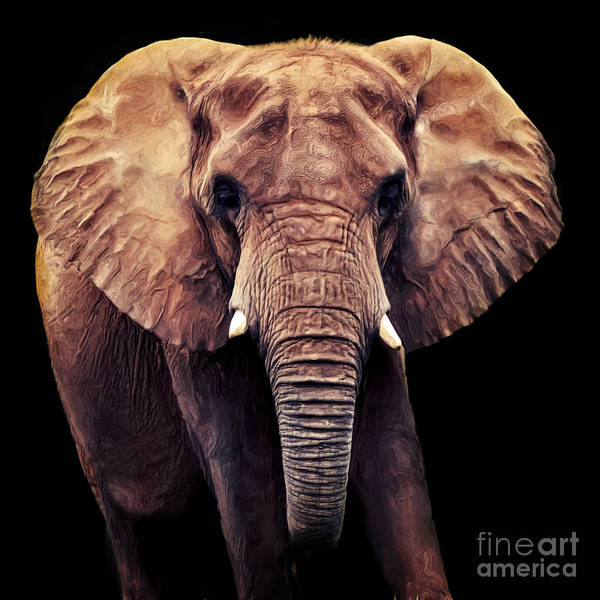Digital Art - Elephant by Angela Doelling AD DESIGN Photo and PhotoArt