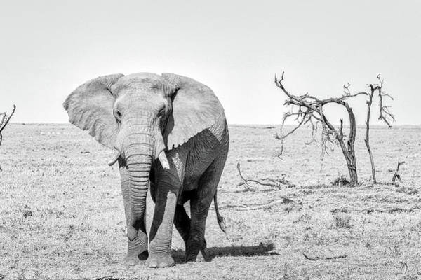Wall Art - Photograph - Elephant by Paul Fell