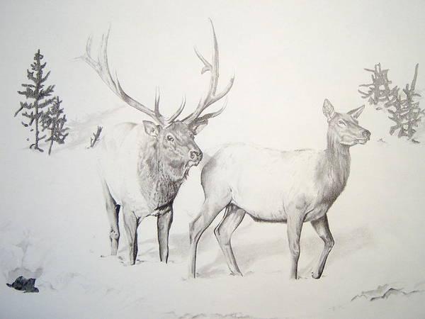 Elk Mountain Drawing - Elk Couple by Trey Stephens