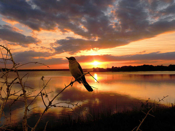 Photograph - Enjoying The Sunset by Michele A Loftus