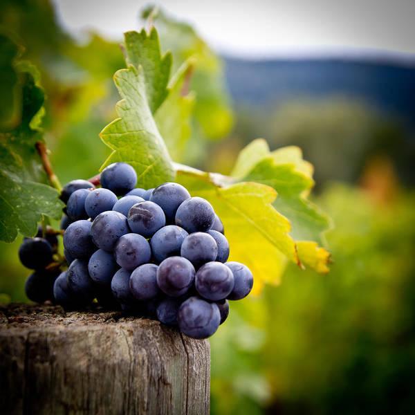 Vining Photograph - Entitled by Ryan Weddle
