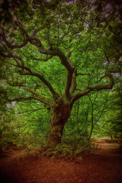 Epping Wall Art - Photograph - Epping Forest Walk by David French