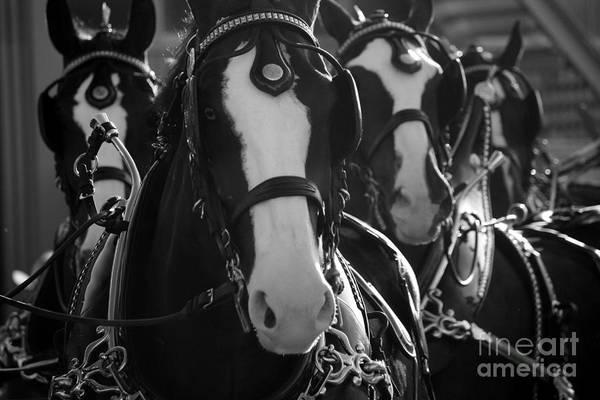 Photograph - Equine Elegance by Wilko Van de Kamp