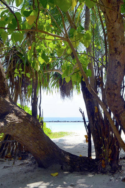 Photograph - Exotic Vegetation On The Beach In Maldives by Oana Unciuleanu