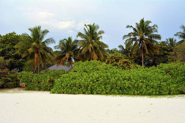 Photograph - Exotic Vegetation With Palm Trees In Maldives by Oana Unciuleanu