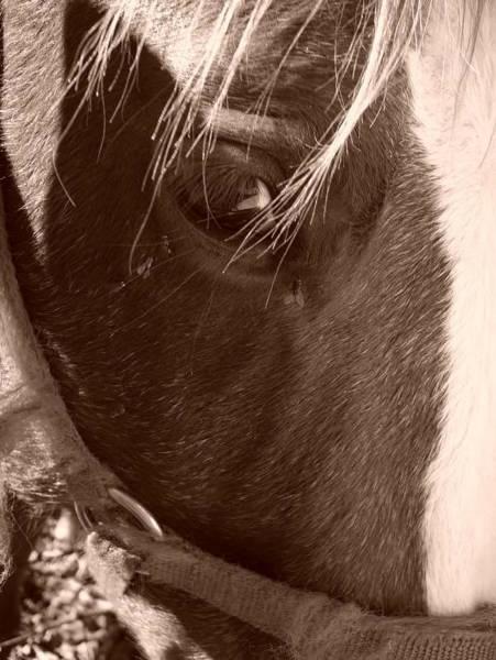 Laura Palmer Wall Art - Photograph - Eye by Laura Palmer