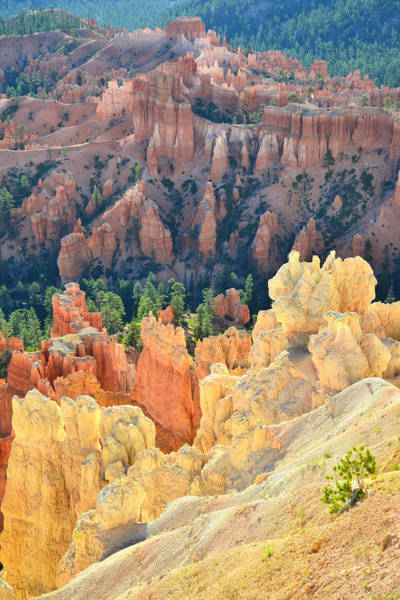 Photograph - Fairy Castle Hoodoos by Ray Mathis