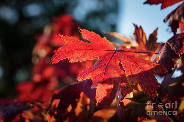 Photograph - Fall Color 5528 23 by M K Miller