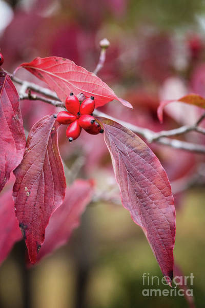 Photograph - Fall Color 5528 55 by M K Miller
