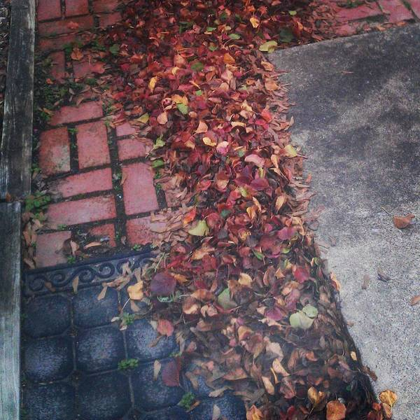 Photograph - Fall Day by Bc Adamkowski
