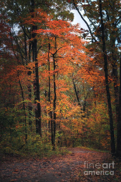 Photograph - Fall In Arkansas by Larry McMahon
