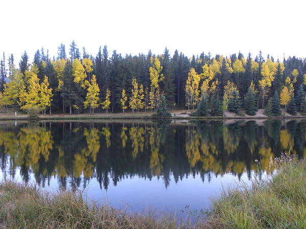 Photograph - Potty Pond Reflection - Fall Colors Divide Co by Margarethe Binkley
