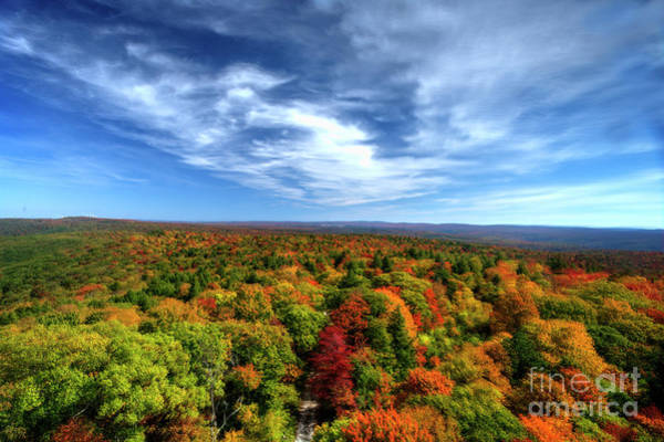 Photograph - Fall Scene Top Of Mountain by Dan Friend