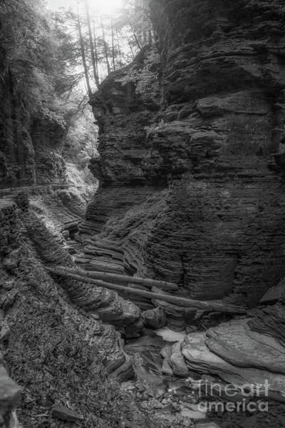 Fallen Leaf Lake Photograph - Fallen Logs Bw by Michael Ver Sprill