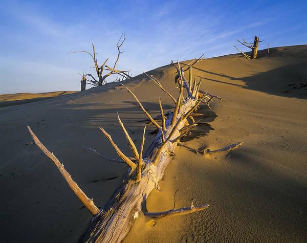 Photograph - Fallen Trees by Robert Potts