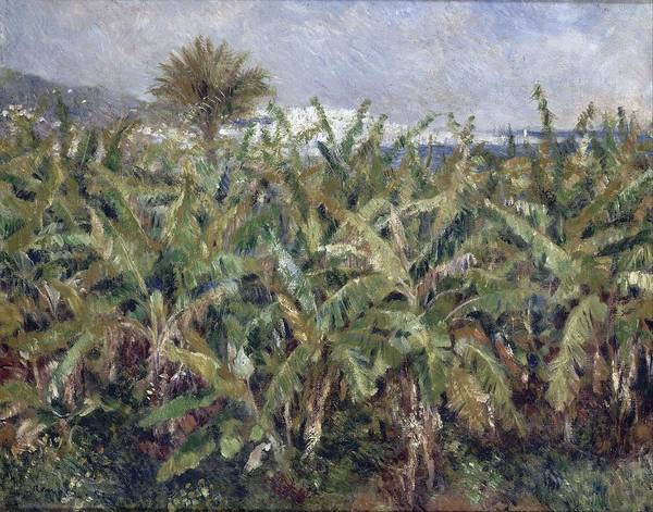 Painting - Field Of Banana Trees by Auguste Renoir