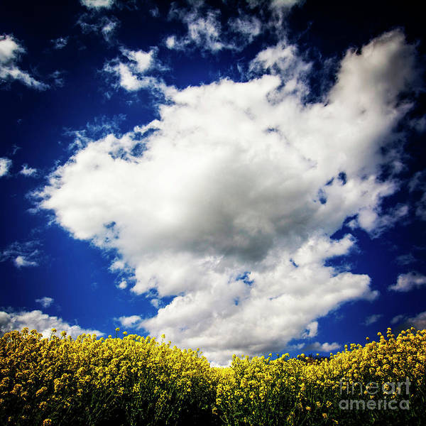 Wall Art - Photograph - Field Of Colza. Auvergne. France by Bernard Jaubert