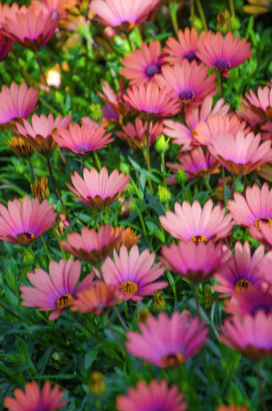 Photograph - Field Of Flowers by Bill Cannon