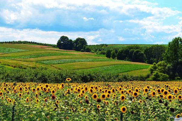 Photograph - Field Of Flowers  by Joseph Caban