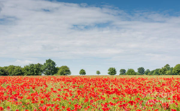 Photograph - Field Of Poppies by Colin Rayner
