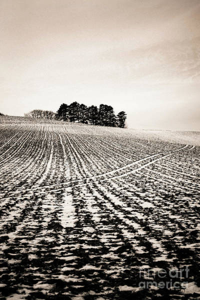 Wall Art - Photograph - Field With Snow-covered Furrows. Auverge. France. Europe. by Bernard Jaubert