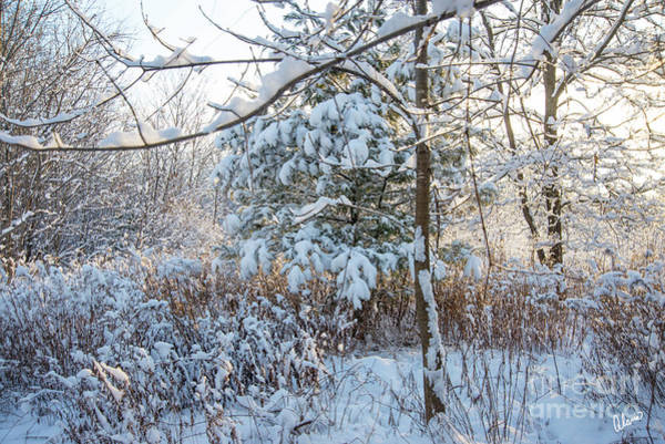 Photograph - First Snow Fall by Alana Ranney
