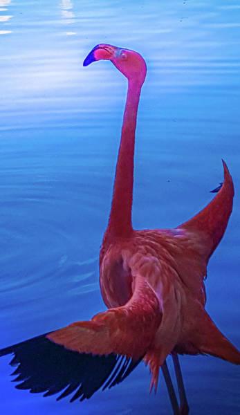 Wall Art - Photograph - Flamingo 2 by Art Spectrum
