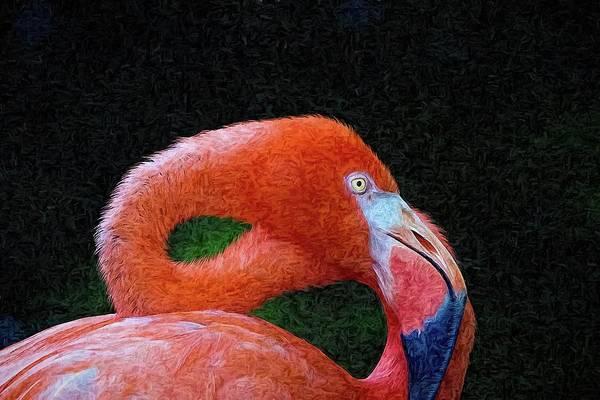 Photograph - Flamingo Curves by Alice Gipson
