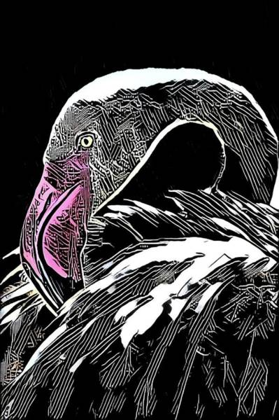 Photograph - Flamingo In Black by Alice Gipson