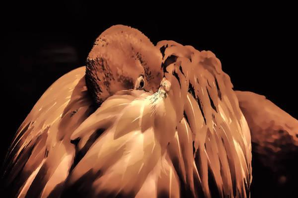 Photograph - Flamingo  by Pete Federico