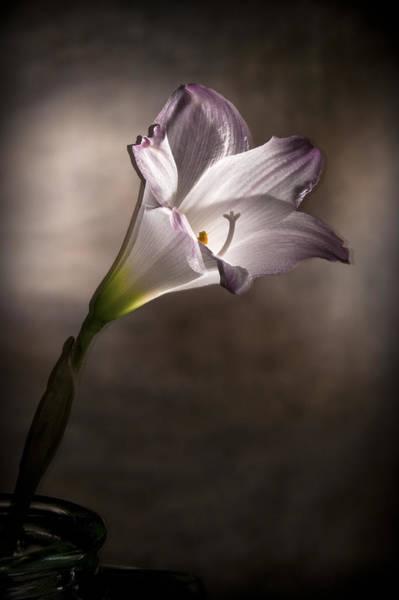 Photograph - Flashlight Series White Flower 6 by Lou  Novick