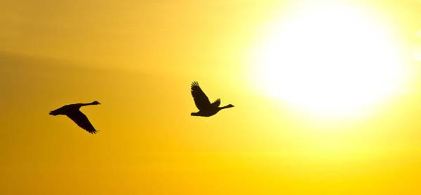 Photograph - Flight by Phil Koch