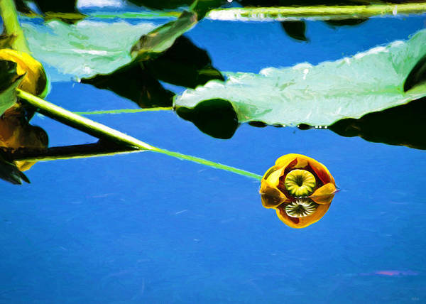 Photograph - Floating Lily  by Greg Norrell
