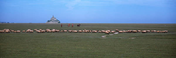 Wall Art - Photograph - Flock Of Sheep Grazing In A Field by Panoramic Images
