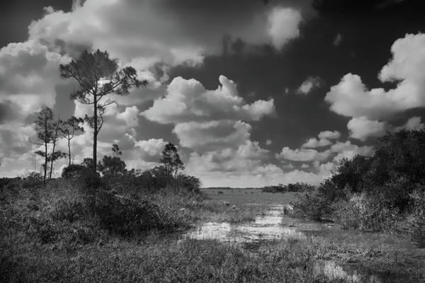 Photograph - Florida Everglades by Rudy Umans