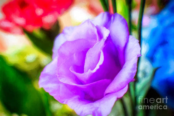 Wall Art - Photograph - Flower by Adrian Evans