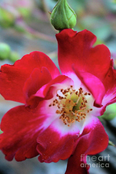 Photograph - Flower Dance by Victor K